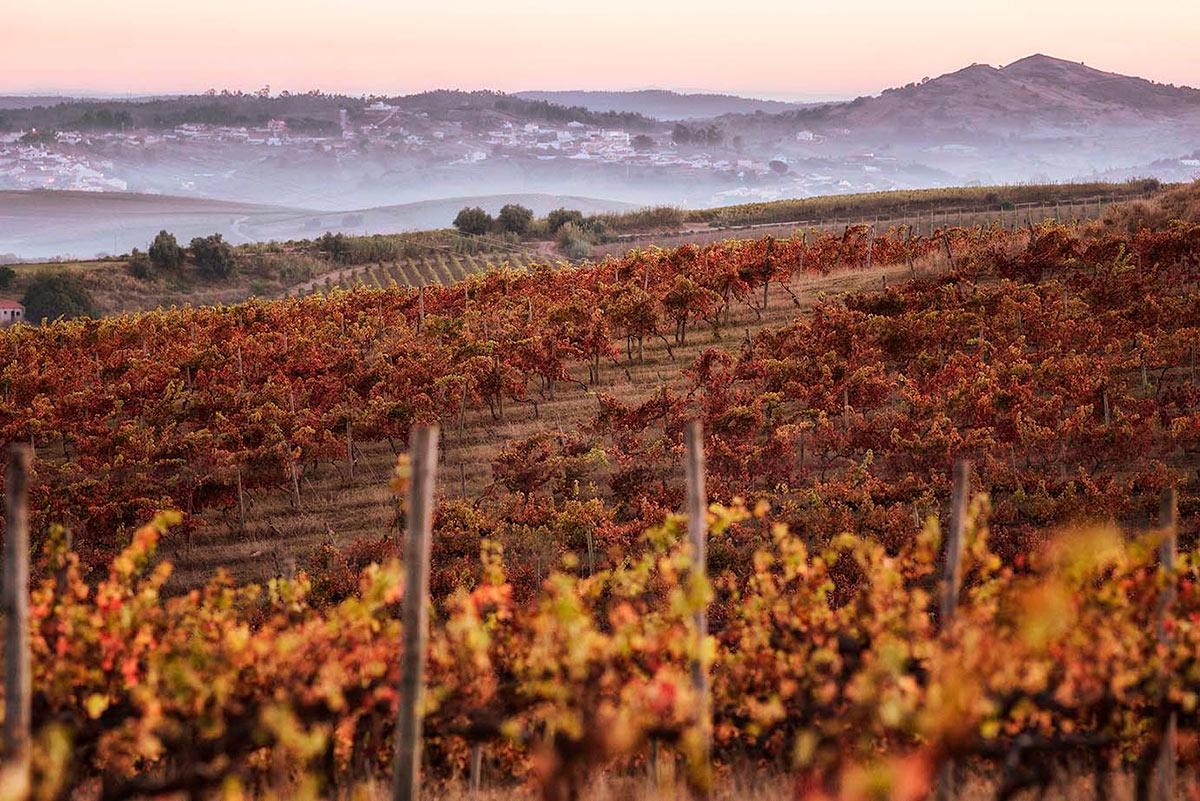 Heritage Wine Experience